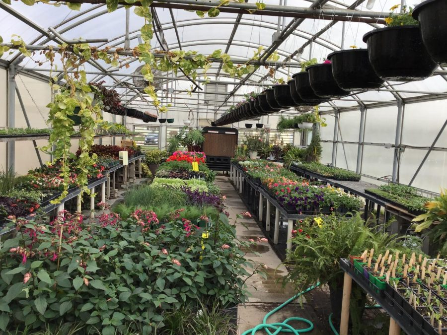 A variety of plants grow in the green house.